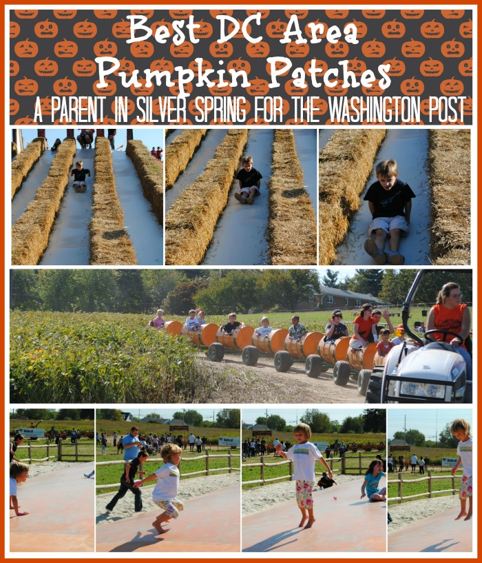 best-dc-area-pumpkin-patches